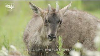 [FOREST IN DMZ] 2부 생명의 숲 l G1방송 20210708 이미지