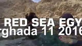 Red Sea Hurghada 11 2016r