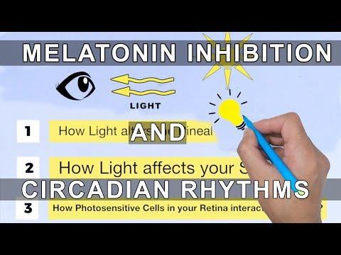 Melatonin Inhibition and Circadian Rhythms
