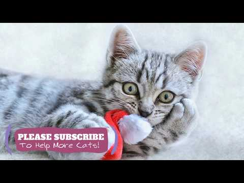 Soothing Music for Cats! Watch Your Cat Fall Asleep Before Your Eyes with LoveCatZone