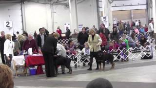 Talos @ Lehigh Valley Kennel Club Show, Allentown Pa