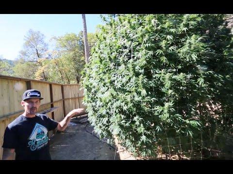 Inside Emerald Family Farms