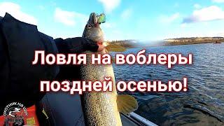 Рыбалка на воблеры поздней осенью Снова открыл сезон 1000 подписчиков на канале