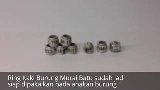 Cara membuat Ring kaki burung Murai Batu   resin coat marks for bird rings