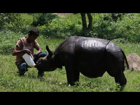 Rare Indian rhinos face growing threat from poachers
