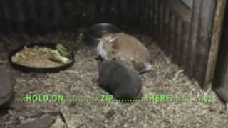 Wombat and Rabbit.