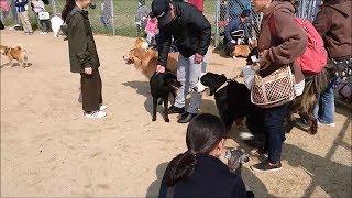 大阪堺市にある広大な「海とのふれあい広場」で遊んだよ☆彡ドッグラン、...