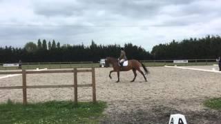 Dressage - BRC Riding Test 14/6/15