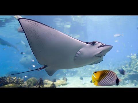 Дикая природа  Удивительная природа барьерного рифа Австралии! HD