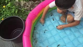 Keanu kuras kolam ikan