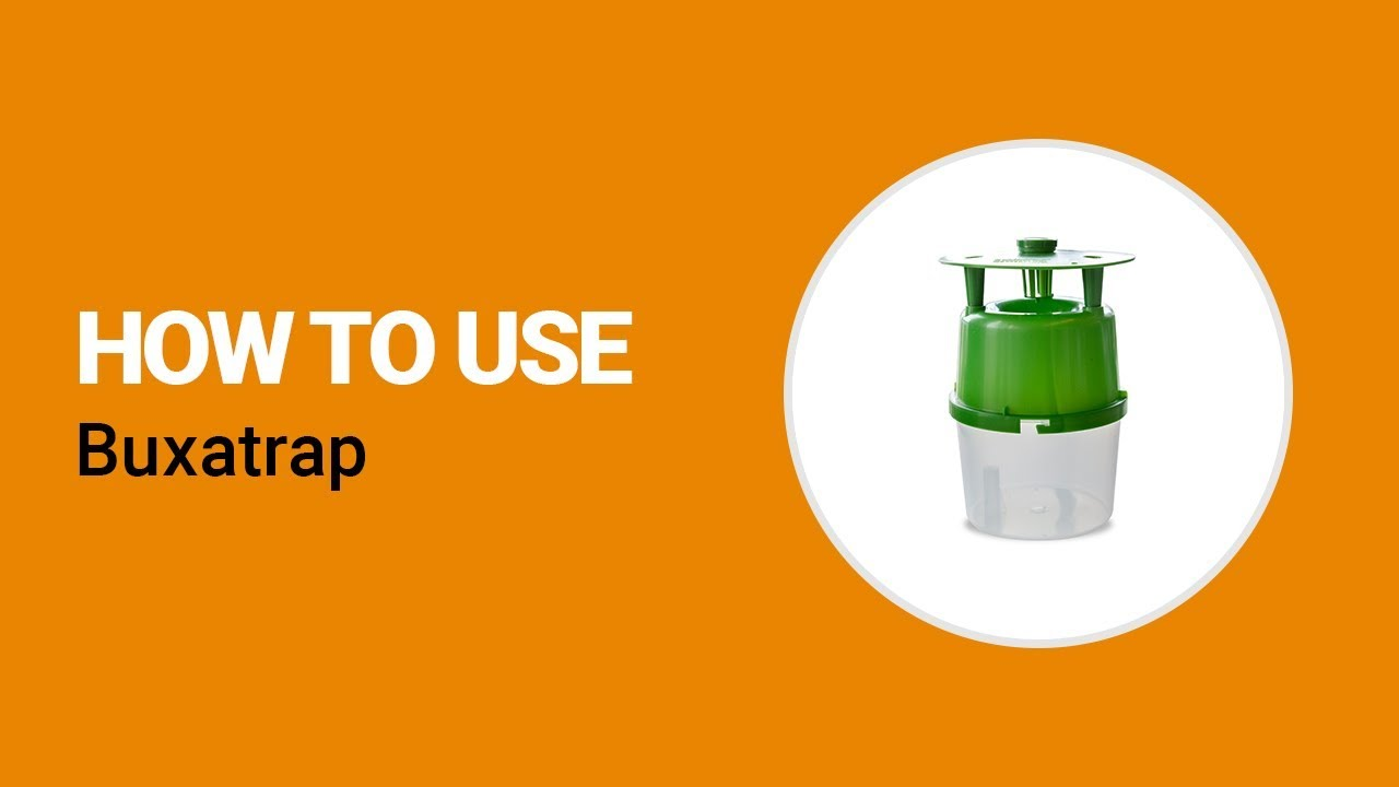 How to use Buxatrap from Koppert - YouTube