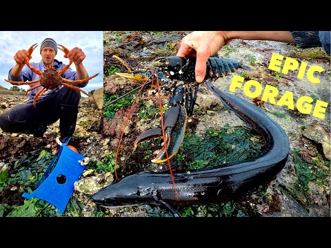 COASTAL FORAGING - Big Spider Crab , Big Lobster And Big Conger Eel ! Cooking Spider Crab On Rocks