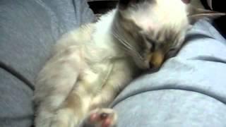 Колыбельная для котенка...умилительно