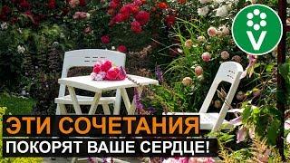 ЛУЧШИЕ СОСЕДИ РОЗ. Такой розарий прекрасен круглый год!