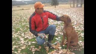 Carbondale Colorado Dog Trainer Rhodesian Ridgeback