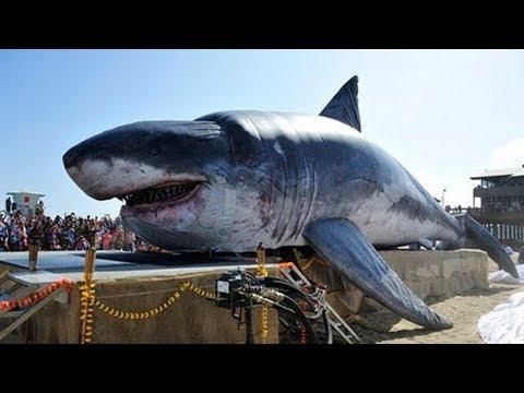 15 Reasons the Megalodon Shark May Still Exist!