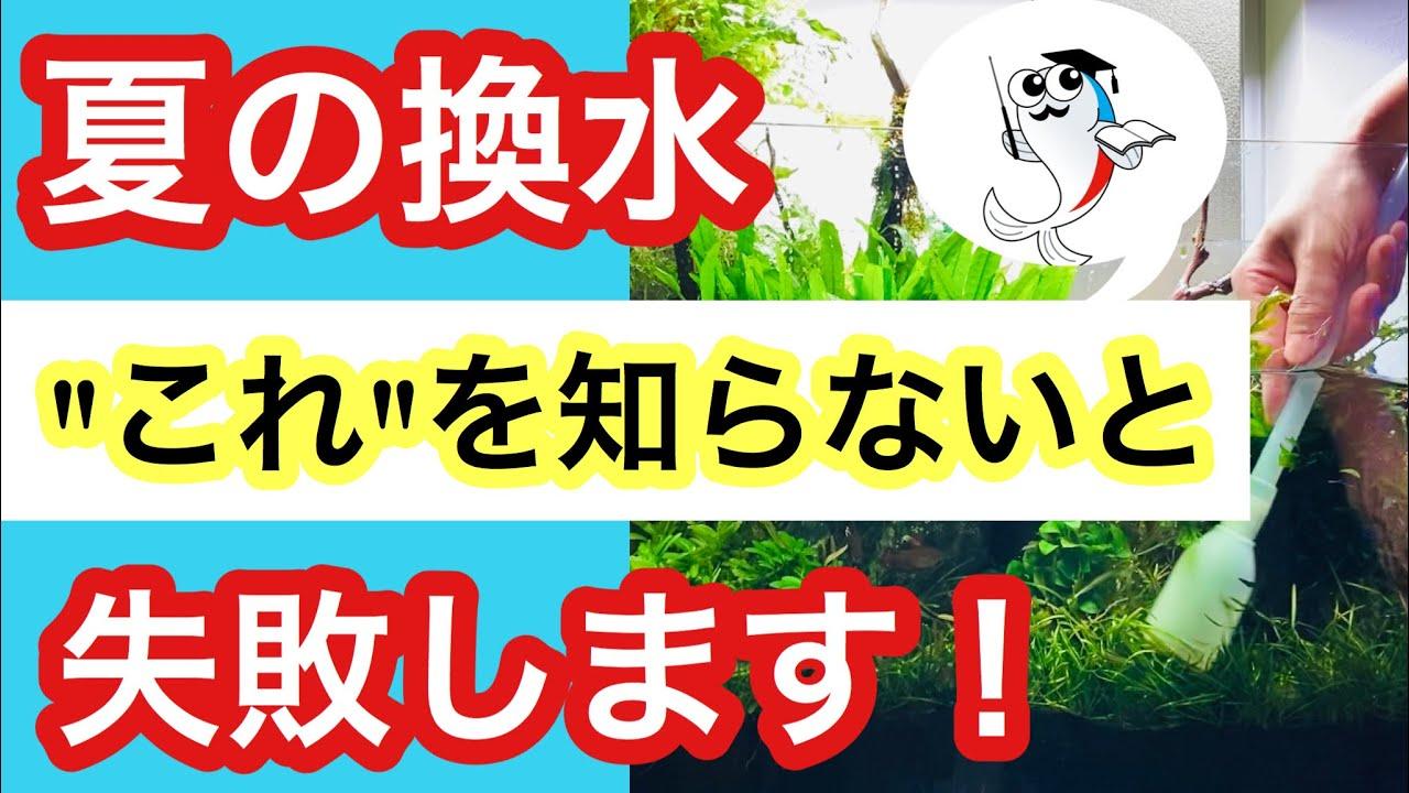 【夏の水換え】暑い時期の換水作業で気を付けるポイントを解説!