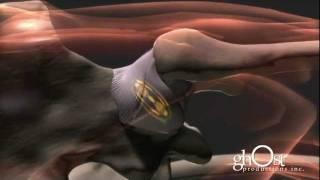 Animación Médica del cuerpo humano