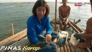 Download lagu Pinas Sarap: Mga bidang sangkap sa Pancit Malabon