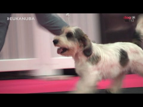 Eukanuba Champion Stakes Final 2016 - UK Final
