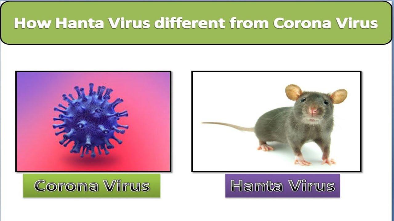 How Hantavirus different from Coronavirus || हंता वायरस ...