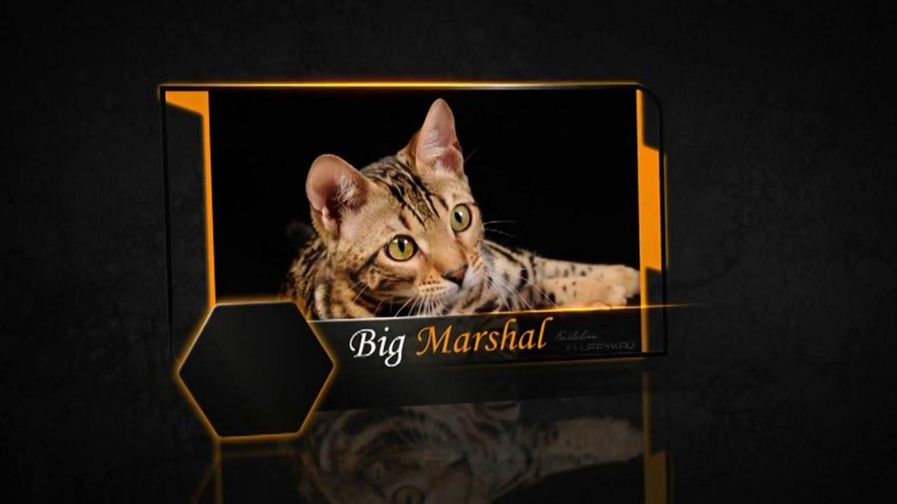 Бенгальский котенок родился 18. 06. 18 мальчик. Мальчик приучен к лотку, с прививками по желанию с документами. Шикарный окрас. Вся украина.