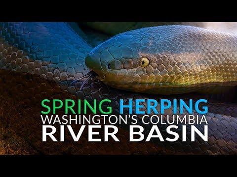 Spring Herping Washington's Columbia River Basin