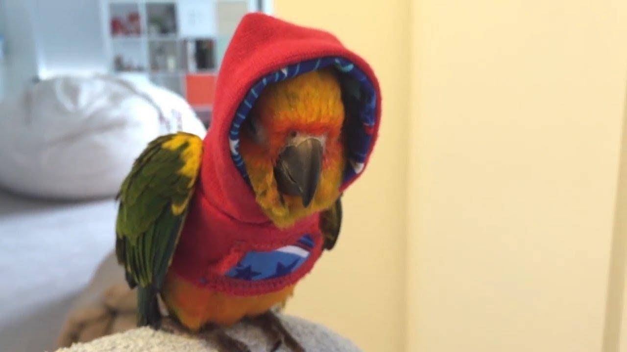 Смешные и талантливые попугаи #2