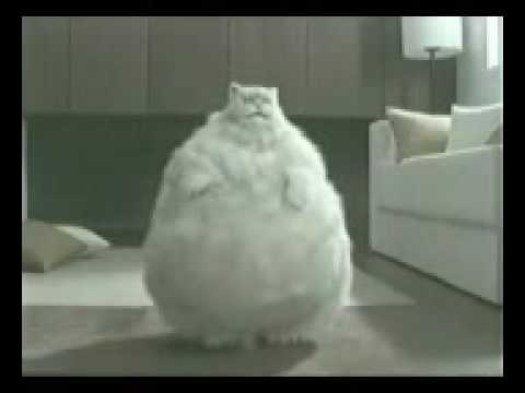 Really Fat Cats Dancing | www.pixshark.com - Images ...