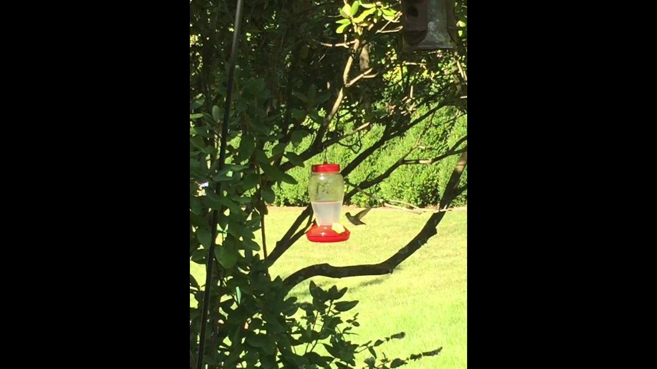 Hummingbird spiritual meaning youtube hummingbird spiritual meaning biocorpaavc Gallery