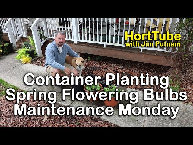 How to Container Plant Spring Flowering Bulbs - Maintenance Monday