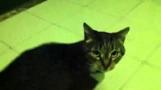 Чья кошка? В ошейнике. Сидит у меня по дверью.