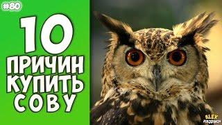 10 ПРИЧИН КУПИТЬ СОВУ - Интересные факты!