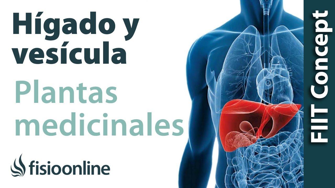 Todas las plantas medicinales para el hígado y vesícula biliar - YouTube