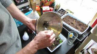 How to Build Your First Vegetable Grow Light for Seed Starting Tomatoes: Easy & Inexpensive (1 of 3)