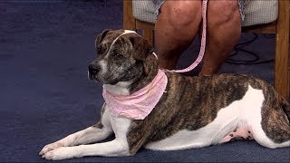 WDEF News 12 Pet of the Week: Kara