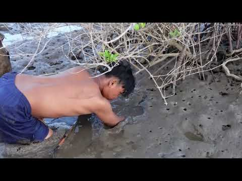 find-king-mud-crabs-in-muddy-at-sea-swamp-by-using-hand-and-traditional-tools