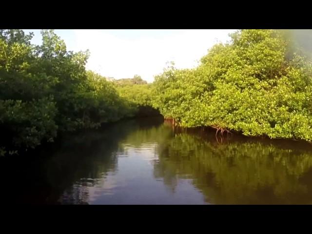 Le Tunnel de Mangrove au Panama
