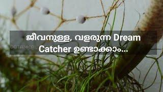 Living dream catcher |an amazing garden idea| spanish moss care| Malayalam DIY