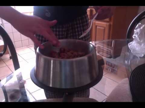 Pitbull Puppy Feeding