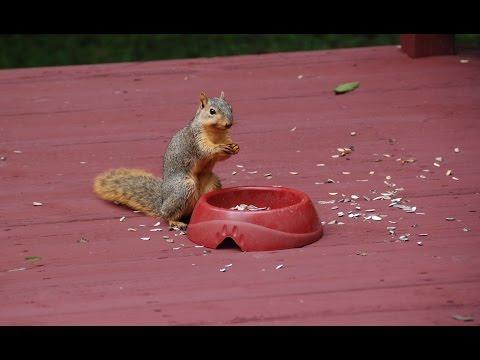 Chipmunk Vs Squirrel
