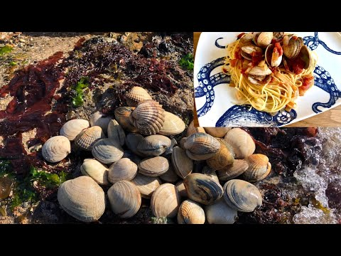Coastal Foraging - Clams, Cockles And Shellfish - Seafood Spaghetti Cook Up