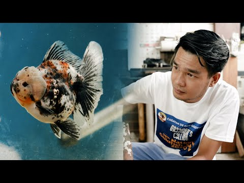 Power Groom Your Goldfish With Live Foods | Ron Ely