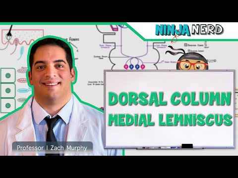 Ascending Tracts | Dorsal Column: Medial Leminiscus Pathway