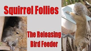 Funny Squirrel Follies - Releasing Bird Feeder