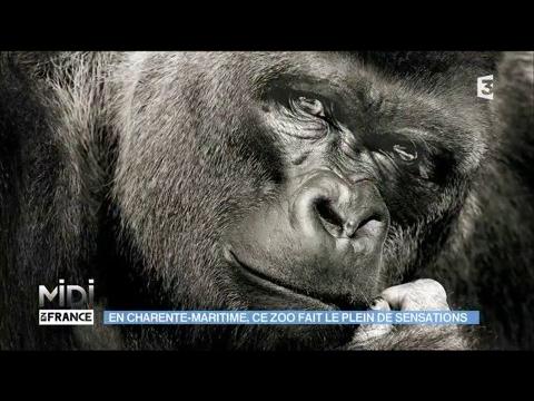 En Charente-Maritime, ce zoo fait le plein de sensations