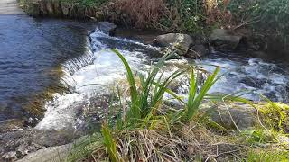 Glen DHOO River 🏞 ISLE OF MAN 🇮🇲 tEAvEE 🎥 1080p60