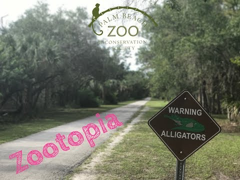 A day at the Zoo | Palm Beach Zoo