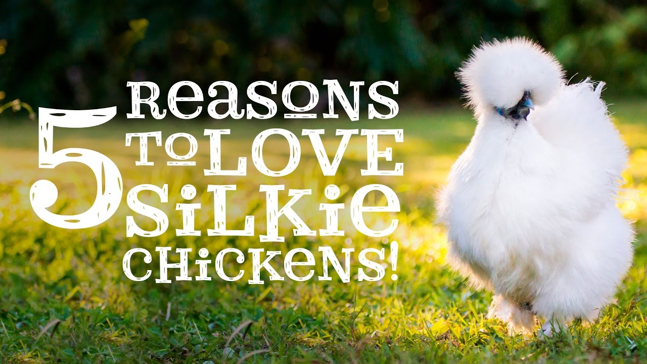 Silky chicks kissing passionately