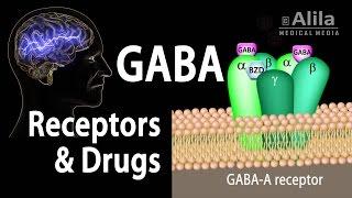 Fundamentos de la neurociencia: de Receptores de GABA GABA Drogas, Animación